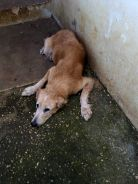 montego bay animal haven travel adopt don't shop animal shelters jamaica