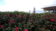 Atlanta Skyline Beyond the Flowerbush