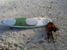 dog surboard beach jamaica travel adopt don't shop