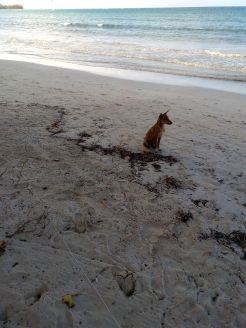 dog beach jamaica travel adopt don't shop