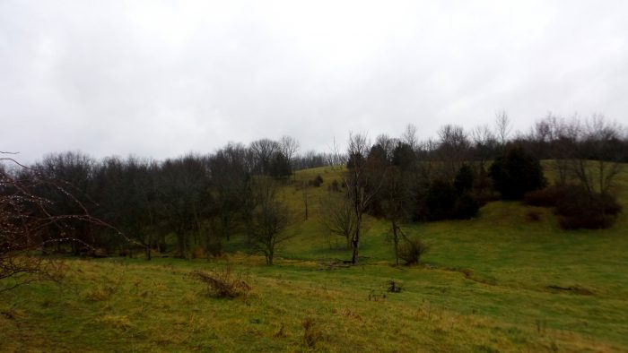 Grassland at Sunderbruch Park in Iowa