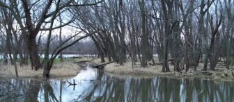 Swampland in Miland, IL