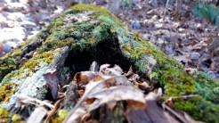 trunk moss algae