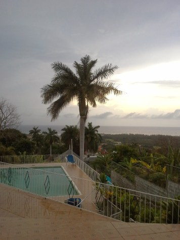 jamaica palm coconut tree tropics travel