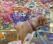 maple rescue dog graffiti artwork lullwater park