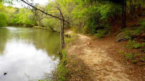 dogs hiking travel explore sweetwater creek state park