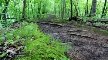 hiking trail travel illinois