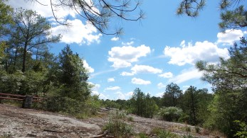 Panola Mountain State Park 4