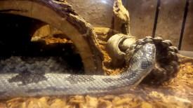 stone mountain georgia atlanta snake