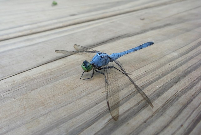 Constitution Lakes Dragon Fly 3