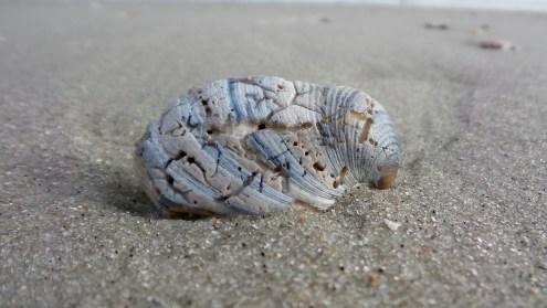 myrtle-beach-winner