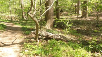 12 Deepdene Park Hiking Trail Druid Hills