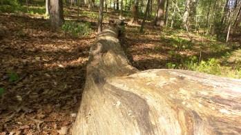 34 Deepdene Park Tree