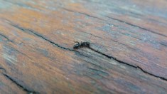 51 Macrophotography Ant