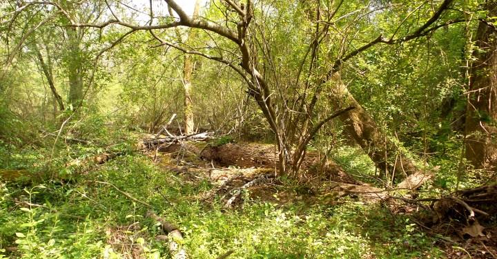 9 Mason Mill Trees