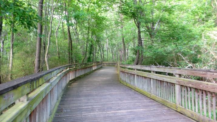 4 Jesters Creek Boardwalk