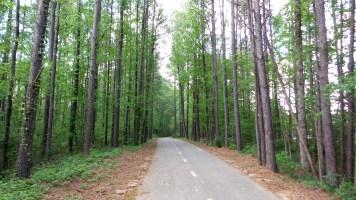 9 Jesters Creek Green Trees