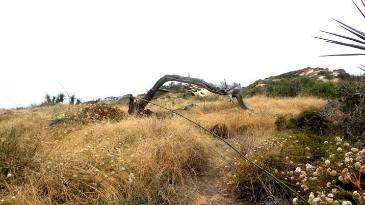 32 Torrey Pines State Reserve Desert