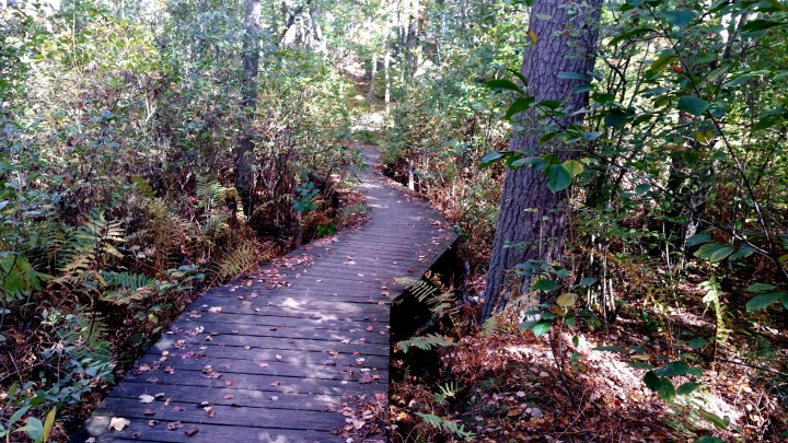 1 Indian Ridge Reservation Boardwalk.jpg