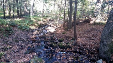 12 Deer Jump Reservation Stream
