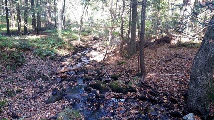 12 Deer Jump Reservation Stream