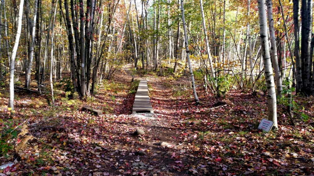 12 Horse Hill Nature Preserve Boardwalk.jpg