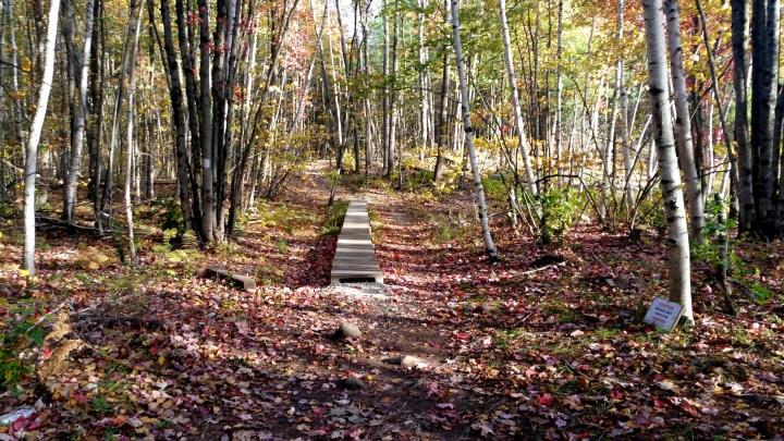 12 Horse Hill Nature Preserve Boardwalk.jpg