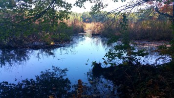 13 Bakers Meadow Reservation Swamo