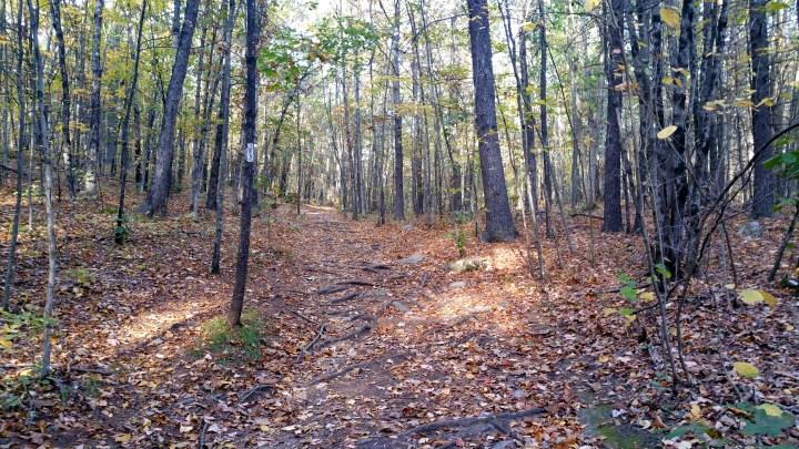 14 Horse Hill Nature Preserve Summit Trail.jpg
