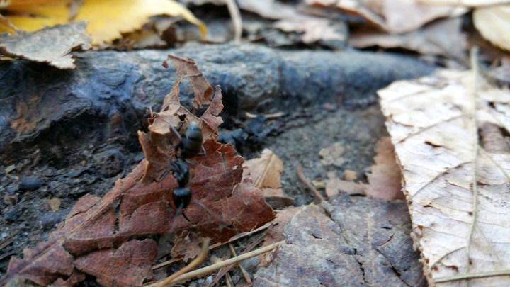 27 Horse Hill Nature Preserve Ant Macro Closeup