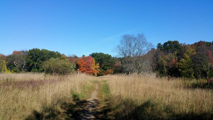 3 West Meadow Reservation Massachussetts