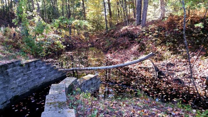 5 Wildcat Falls Wall and Tree.jpg