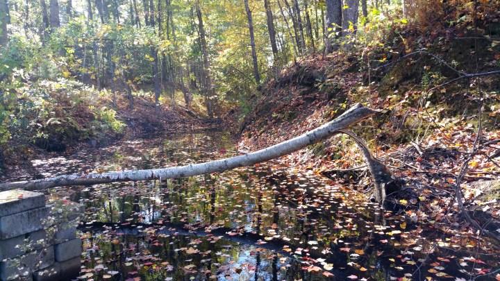 6 Wildcat Falls Fallen Tree.jpg