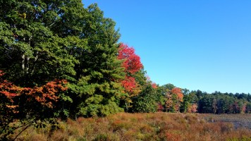 7 Bakers Meadow Reservation Hiking Trail
