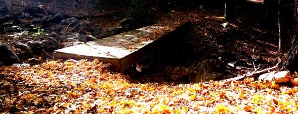 7 Deer Jump Reservation Boardwak Bridge