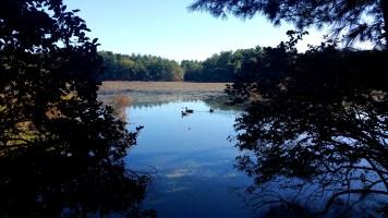 8 Sakowich Reservation Ducks