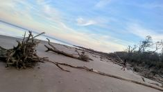 11 Alexis Chateau Blackrock Beach Driftwood