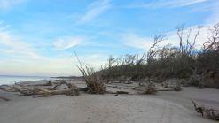 33 Blackrock Beach White Driftwood Hiking in North Florida