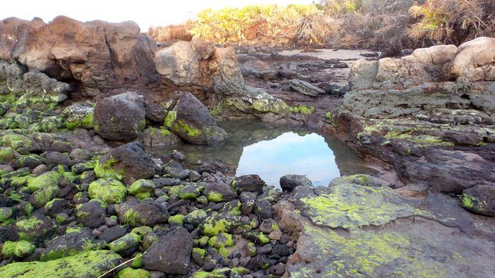 34 Blackrock Beach Green Algae Water
