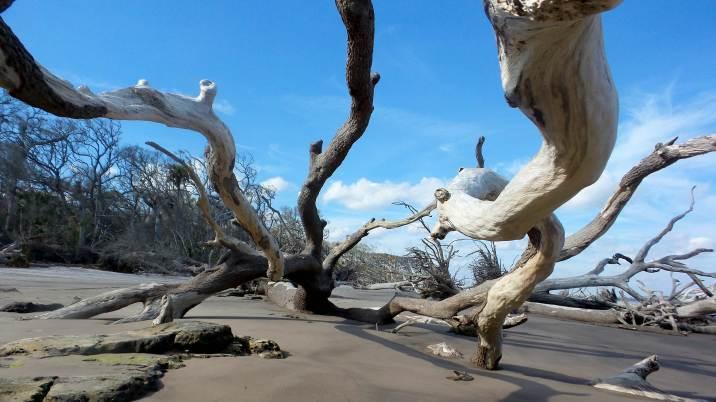 4 Blackrock Beach White Driftwood Florida