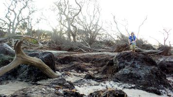 49 Blackrock Beach Driftwood Winston Murray
