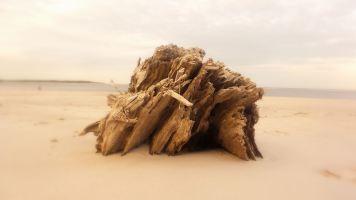 50 Blackrock Beach Tree Trunk
