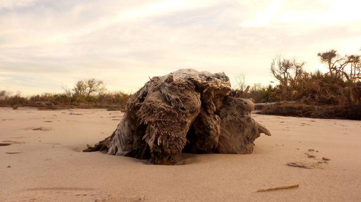 53 Blackrock Beach Sunseat Dead Tree