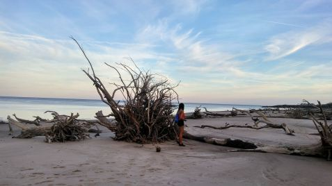 8 Alexis Chateau Blackrock Beach Traveler