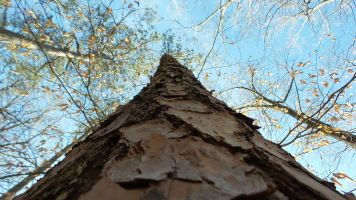 27 Tree Cascade Springs Nature Preserve