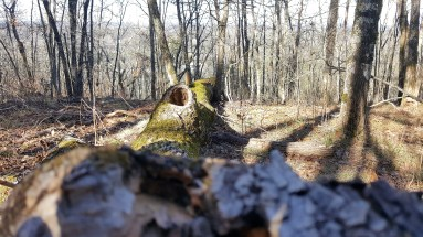 33 Nature Photography Stone Mountain GA