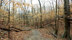 35 East Palisades Hiking in Atlanta