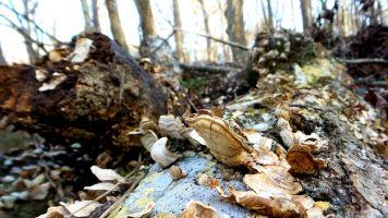 45 Cascade Springs Nature Preserve Fungi