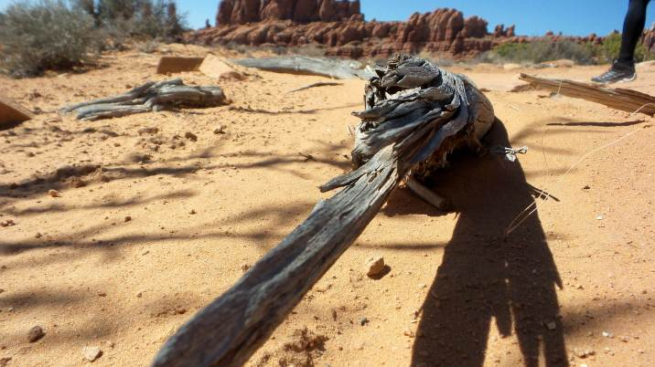 20 Arches National Park Hike to Tower Arch
