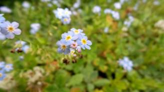 03 Jensen Olson Arboretum Alaska Flowers